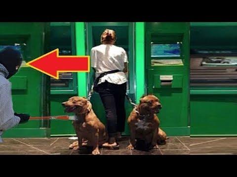 Sahiplerini Polislerden Daha İyi Koruyan Köpekler