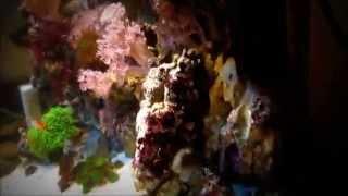 Морской аквариум 150 литров с сампом(Это был морской аквариум 150 литров с тумбой с сампом, живыми камнями, рыбами и живыми кораллами. Зрелость..., 2013-07-20T09:00:29.000Z)