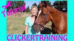 PFERDE CLICKER TUTORIAL I Wie clickert man Pferde I THEORIE Teil 1 I Target Training mit Wölbchen