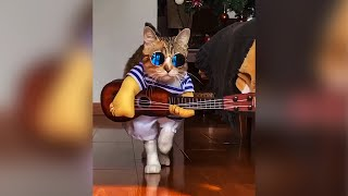 😂 Funny animals 😻 compilation #3 - Best Of The 2020 Funny Animal Videos 😹 - Cutest Animals Ever
