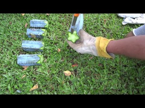 how to take a cutting of a cactus