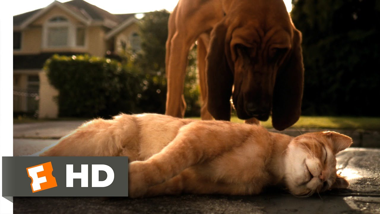 Cats \u0026 Dogs (1/10) Movie CLIP , Catnapped (2001) HD