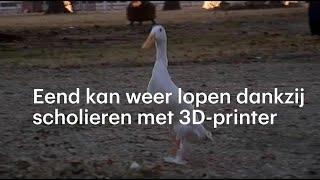 Eend kan weer lopen dankzij scholieren met 3D-printer - RTL NIEUWS