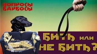 Можно ли наказывать собаку?