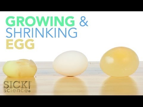 Growing and Shrinking Egg - Sick Science! #187