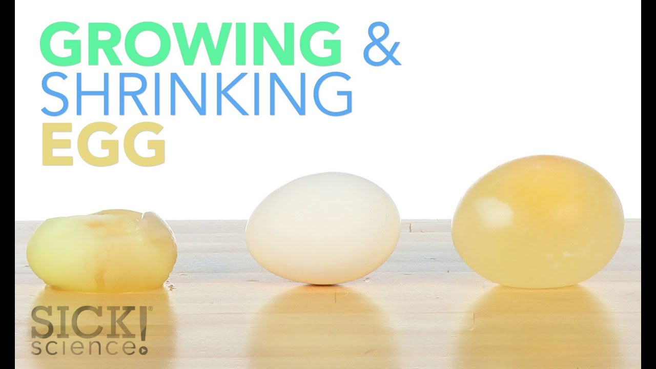 The Naked Egg Science Lab - Teach Chemical Reactions and