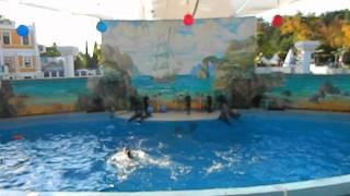 Шоу дельфинов Сочи 2014г