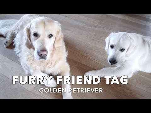 FURRY FRIEND TAG | My dogs introduces themselves