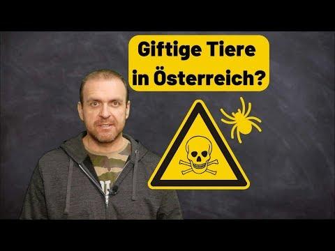 Outdoor - giftige Tiere in Österreich? Welche gibt es da?