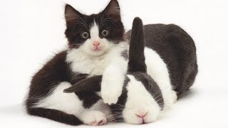 MOST Crazy Cats Annoying Rabbits, Can't be More Cute and Funny Cats and Bunnies Videos by Animals TV
