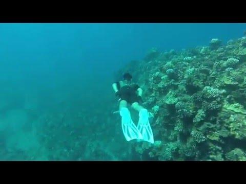 Lanai island underwater