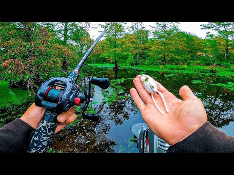 TOPWATER HEAVEN?! Instant Action In Bass Fishing Tournament At My Favorite Lake