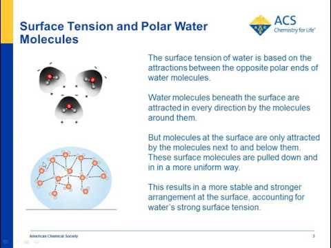 Surface Tension | Chapter 5: The Water Molecule and