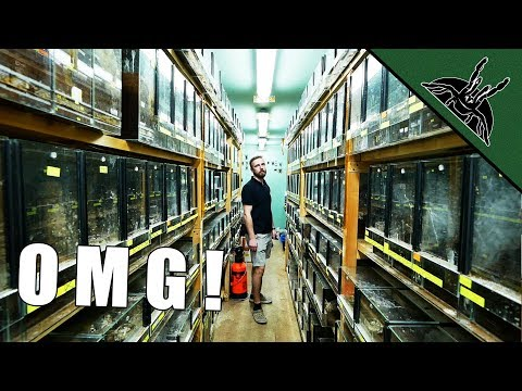 BIGGEST TARANTULA COLLECTION - spidersworld.eu tour