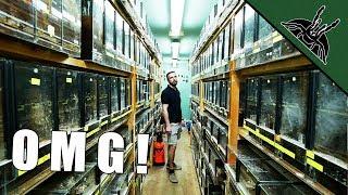 BIGGEST TARANTULA COLLECTION - spidersworld.eu tour