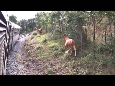 chemin de fer de la corse - Corte à Mezzana