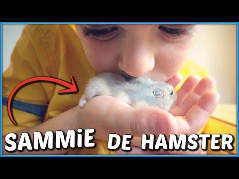 DE HAMSTERKOOi VAN