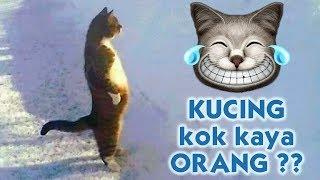 Tingkah Lucu Kucing Meniru Manusia 😺 🐾