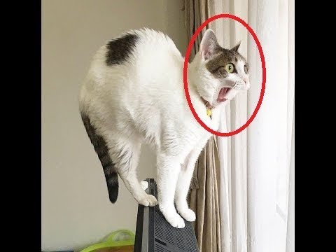♥Cute Cats and Kittens Doing Funny Things 2018♥ #9 - Funny Cat compilation