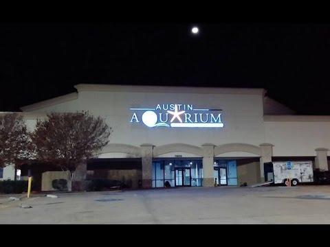 Austin aquarium youtube for Fish store austin