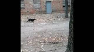 Оооочень кусачая собака