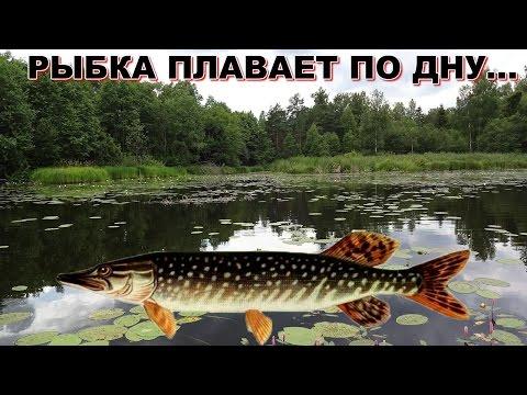 ловля на кружки на пруду