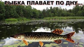 Ловля щуки на кружки . Смехуёчки:-)(Вечерний выезд на кружки ,на озеро!Щук особо не поймали зато поймали раков)Но это в видео не вошло!, 2015-08-16T17:01:59.000Z)