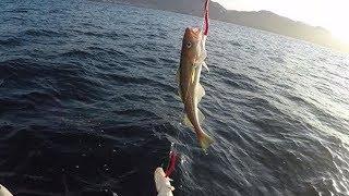 Морская Северная рыбалка / Териберка / Треска / часть 3 / North sea fishingHD 2019