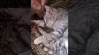кот дергается во сне