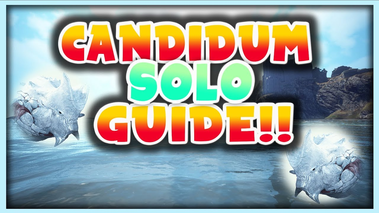 Candidum Solo Guide Updated! KeyBoard Users After Nerf | Black Desert Online
