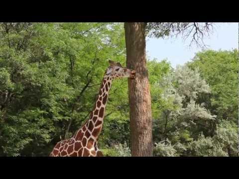 Giraffes in Space!