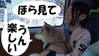 2019年2月某日、甲斐犬ハルヱと老柴犬エミーを含む家族6名でクルマに乗...