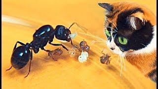 SLIVKI SHOW and NEW ANTS