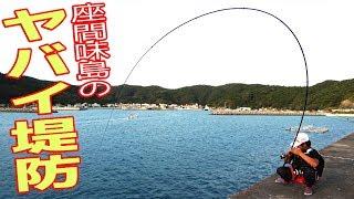 ヤバイ堤防で大物を狙う 座間味島 #1