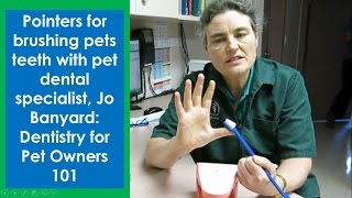 Pointers for Brushing pets teeth with pet dental specialist Jo Banyard: Dentistry for Pet Owners 101