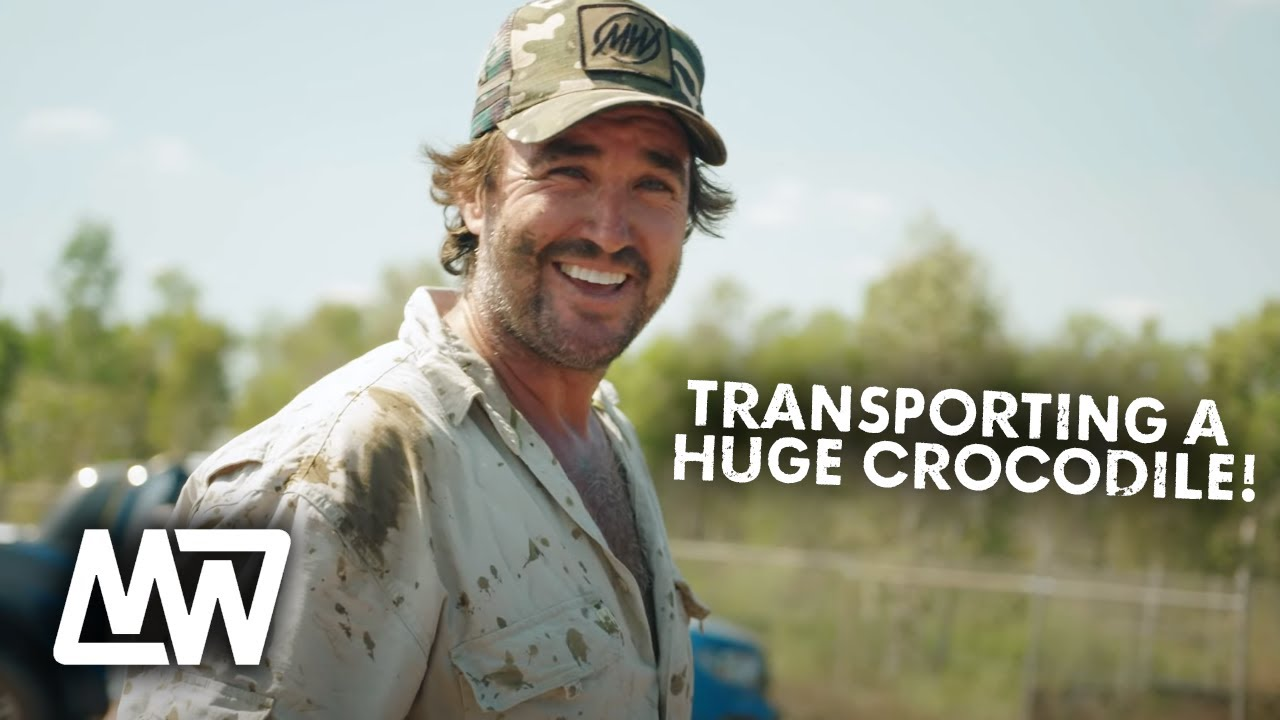 Download How We Transport a HUGE CROCODILE to a New Home! | Full Episode | Matt Wright
