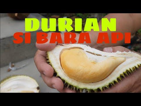 DURIAN SI BARA API