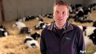 Sourcing dairy-beef calves: Alan Dillon