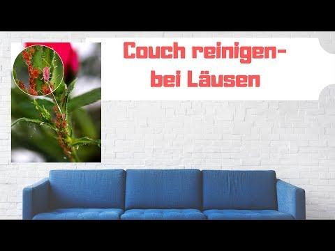 Sofa Reinigen Bei Läusen Couch Reinigen Testsieger Top 5