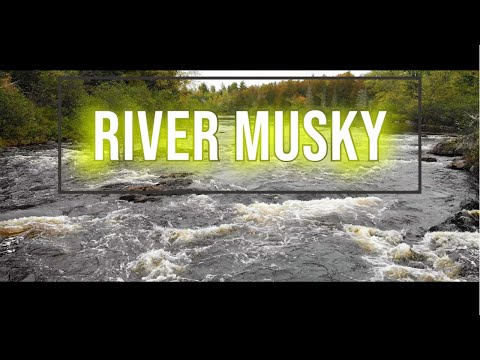 Shallow River Musky | (The Best Kind Of Musky)