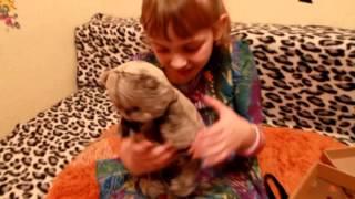 Басик кот Оленька Невероятный мир