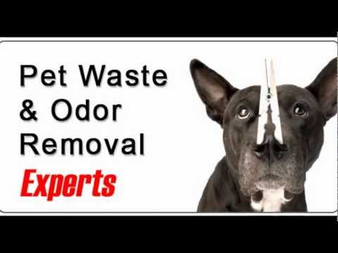 Pet Stain Removal Denver | Up To 50% Off! | Urine Odor Removal Denver