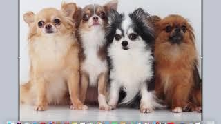 http://pet-benryyyy.com 犬の飼い方についてブログも書いています。 無...