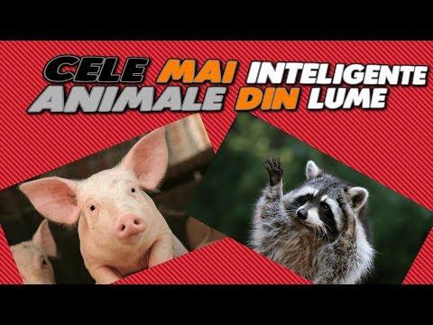 10 Cele Mai Destepte Animale Din Lume