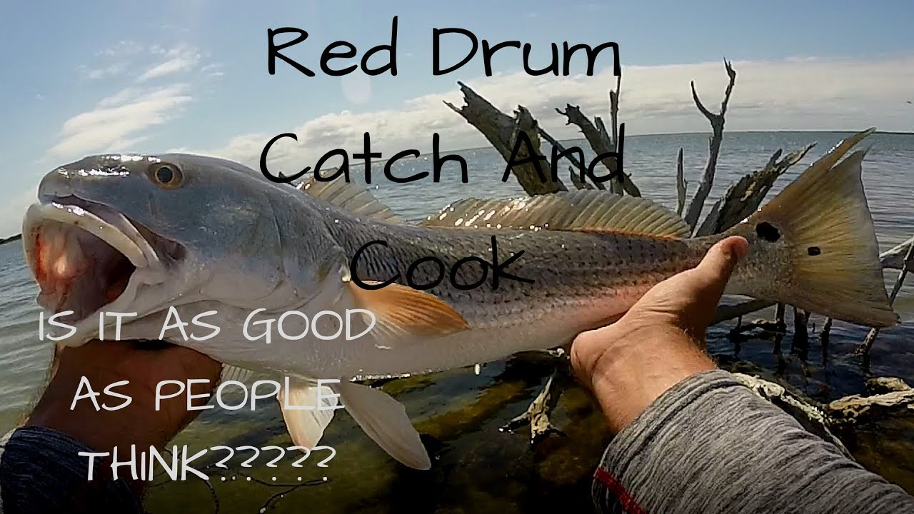 Catch and cook redfish or red drum youtube for How to cook drum fish