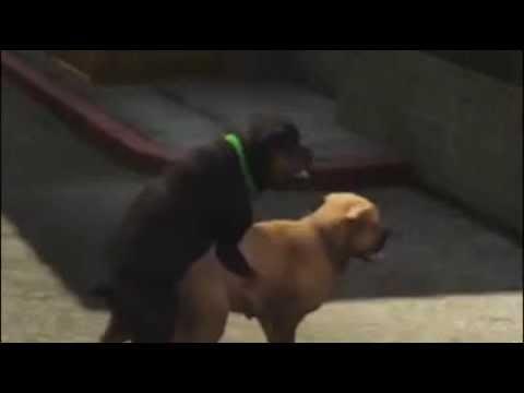 Проститутку ебет собака где снять проститутку в Тюмени пер 4-й Степной