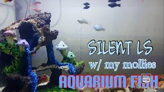 Aquarium Fish Silent LS (Molli…
