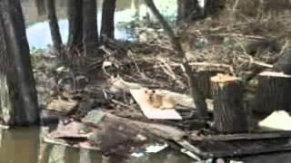 собаки,наводнение новокузнецк