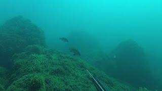 Подводная охота без обработки. Рыба подойдет сама.