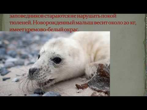 """новая рубрика """"КРАСНАЯ КНИГА ЛЕН ОБЛАСТИ"""""""